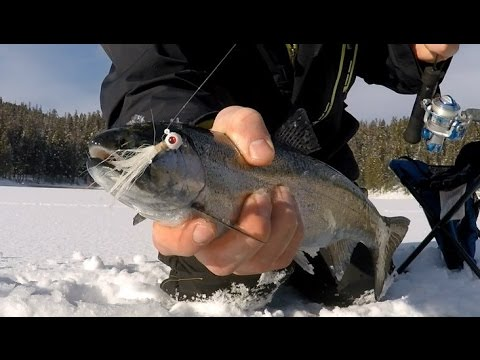 Ice Fishing Rainbow Trout