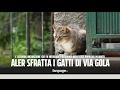 """A Milano i gatti finiscono sotto sfratto. Ex cacciatore vuole salvarli: """"Intanto le case cadono a pezzi"""""""