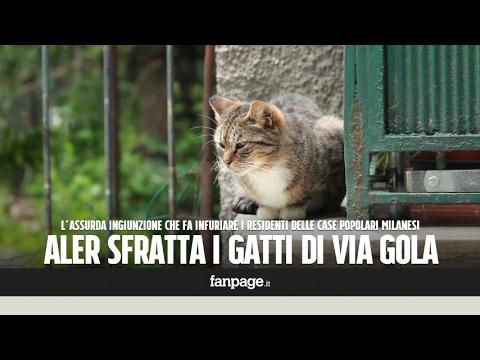 Risultati immagini per gatti milano sfratto