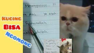 Download Video Viral!!! Kucing Bisa Ngomong !!! Menit Terakhir Bikin Gemes MP3 3GP MP4