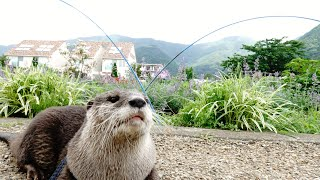 Aty's Adventure! Explore the lake at the foot of Mt. Fuji! [Otter life Day 284]【カワウソアティとにゃん先輩】