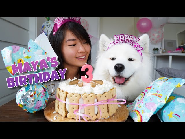 My Dog's EXCITING Third Birthday!!! [With DIY Dog Birthday Cake Recipe]