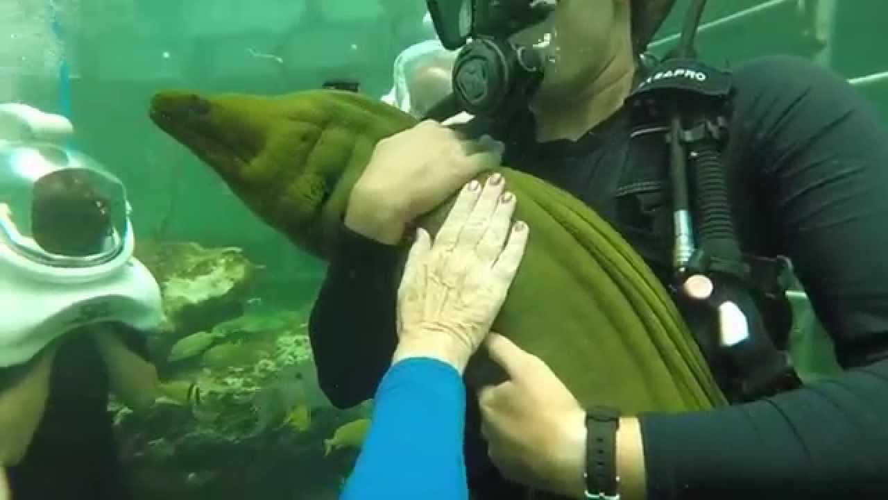 Miami Sea Aquarium Sea Trek