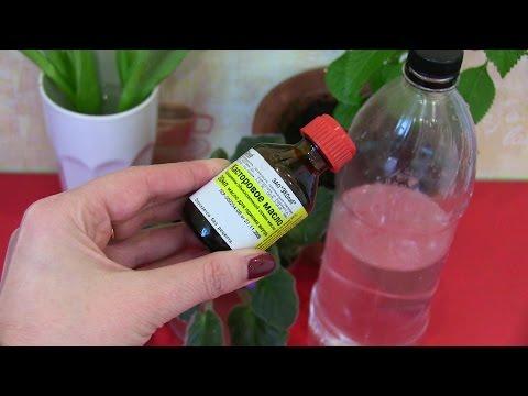 Касторовое масло для растений как удобрение видео