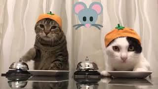 Koty Żebraki!!!