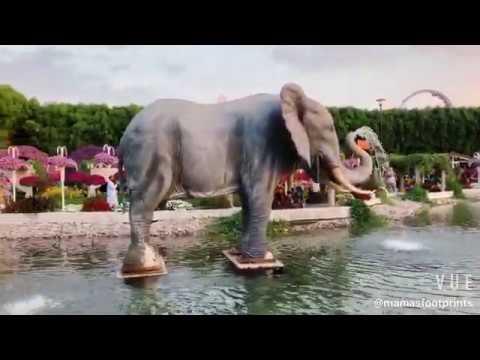Miracle garden, Dubai 2019, visit and enjoy