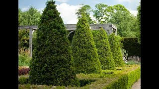 Обрезка лиственных и хвойных деревьев
