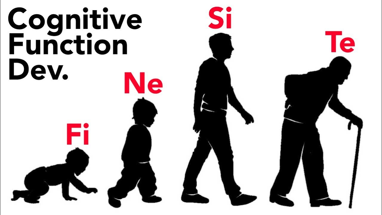 Cognitive Function Development Through Stages of Life