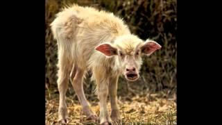 Купи козу! (пранк) телефонный прикол