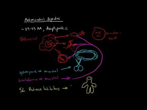 Immunology - Antimicrobial Peptides