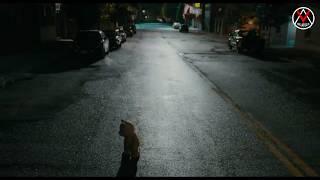 Медведь Тед на русском языке в хорошем качестве | Смешные моменты из фильма Третий лишний | Mr.ADLER