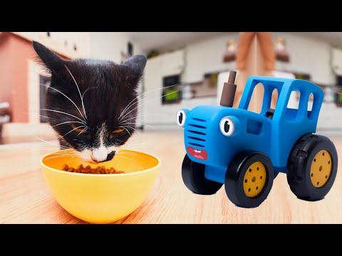 Малыш и синий трактор кормят кота и животных на ферме. Видео для детей