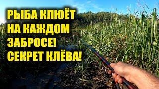 Рыба клюёт на каждом забросе Рыбак рассказал секрет клёва рыбы