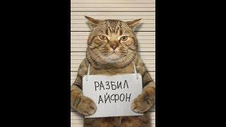 ПРИКОЛЫ С КОТАМИ! ТЕСТ НА ПСИХИКУ!!!