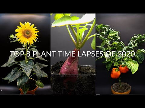 TOP 8 Plant Growing Time Lapses Of 2020 - 384 Days in 8 Minutes