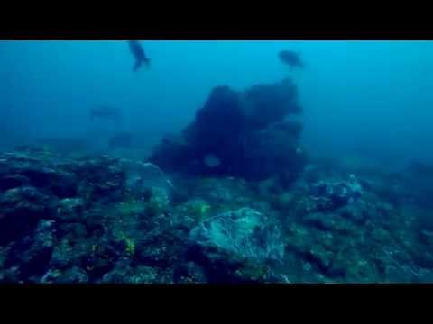 Spearfishing Trinidad - East Coast Blues