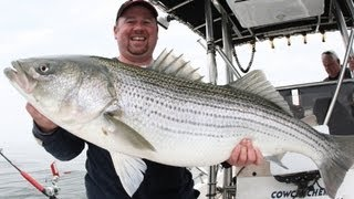 Striped bass, Fresh Water,Umbrella Rig, Basics, Striped Bass- Team Old School