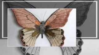 Мотыльки и бабочки - презентация слайдшоу