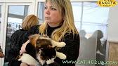 Продажа бурманских котов, котов и котят с ценами и фото от владельцев и питомников.