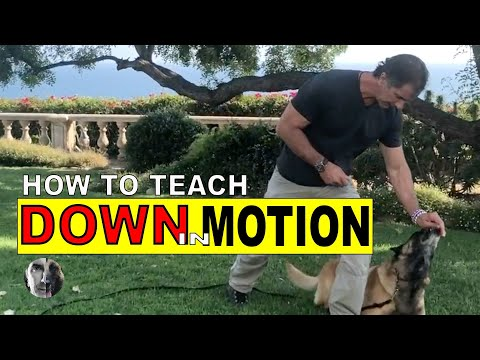 Teach Your Dog DOWN in Motion - The MOTION DOWN Exercise - Dog Training Video
