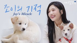 Joy's Miracle [Dogs Are Incredible]