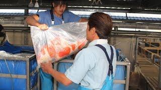 Sakai Fish Farm Ambiance