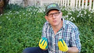 The Best Gardening Gloves you will own