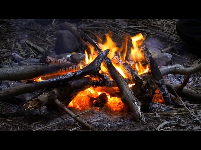 Wo ist Feuer im Wald machen erlaubt? Die 3 Wichtigsten Verhaltensweisen!