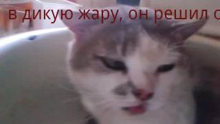 Прикол с котом в дикую жару
