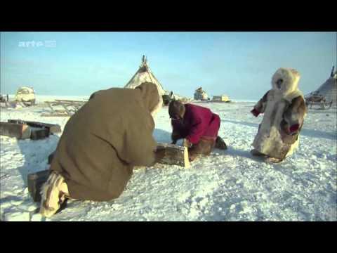 Sibirya tundralarında yaşam