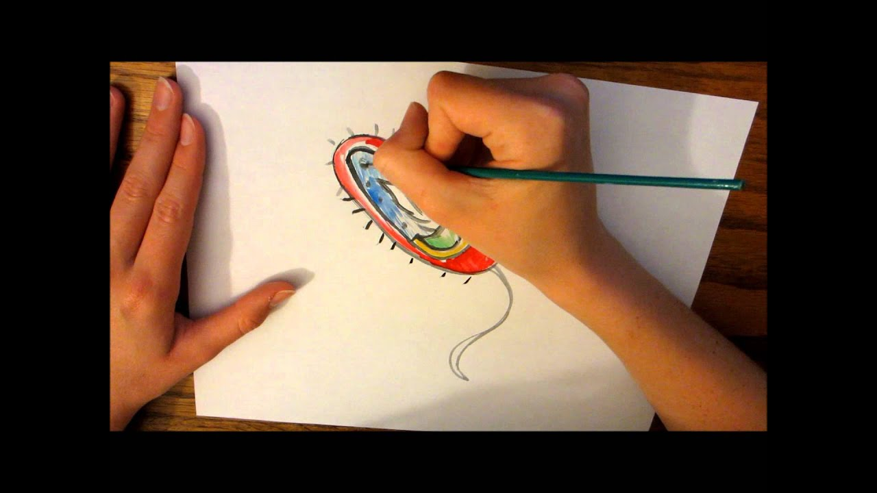 a bacteria cell drawing - YouTube
