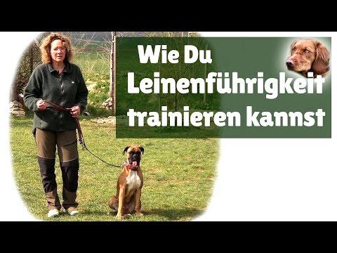 Leinenführigkeit ► Hilfe... mein Hund zieht an der Leine ! Leinenführigkeit trainieren
