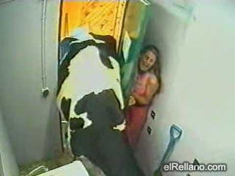 Thumbnail: Women and cow