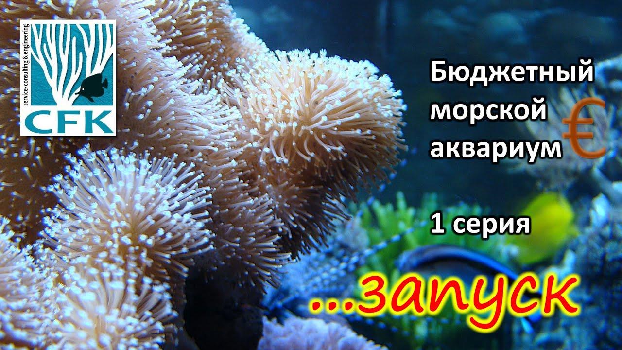 Бюджетный морской аквариум. 1 Серия