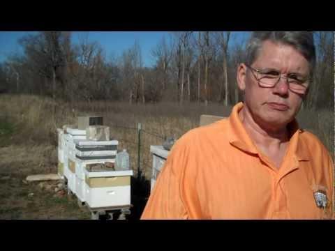 How To Buy The Best Bee Pollen