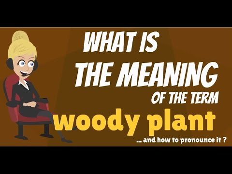 What is WOODY PLANT? What does WOODY PLANT mean? WOODY PLANT meaning, definition & explanation