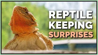 5 Things I Didn't Expect while Keeping Reptiles
