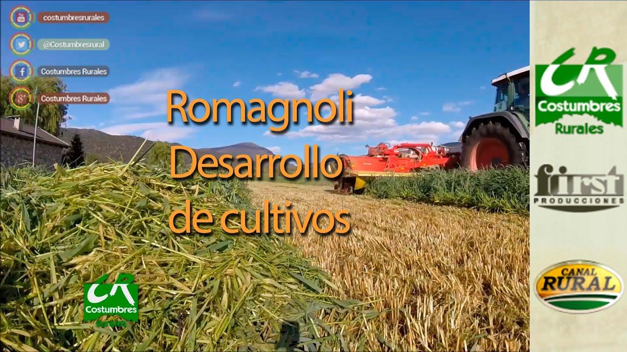 Desarrollo de cultivos con Romagnoli - CR#771