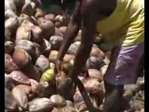 Making coconut copra in La Digue