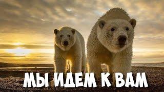 видео: Новая земля Нашествие Белых Медведей