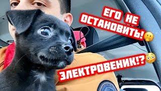 """Милый щенок наводит """"порядки"""" в новой семье.. Опасен!))"""