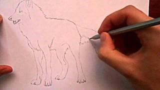 Видео: как нарисовать волка?(обучающее видео по рисованию волка простым карандашом поэтапно для начинающих., 2016-01-04T09:19:02.000Z)