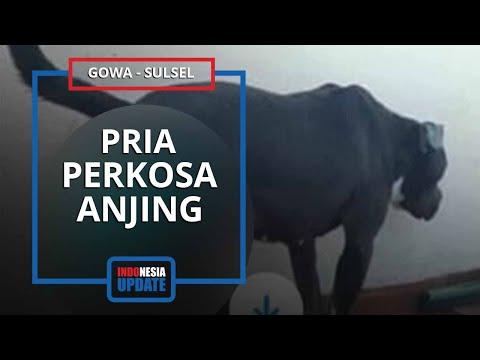 Kronologi Pria Ngaku Perkosa Anjing setelah Terpengaruh Video Porno, Foto - fotonya Turut Dibagikan