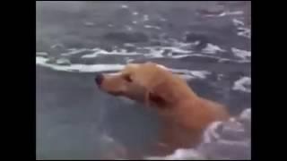 Dolphin help dog