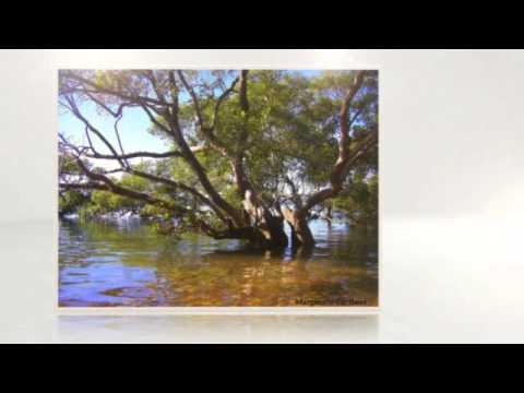 Bay Islands Moreton Bay