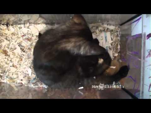 That's why I love cats! vol. 2 (Миллион причин любить котов. часть 2)