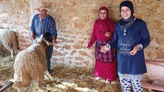 نطحها الحولي😥 طريقة اختيار خروف عيد الأضحى مع با قدور و لالة حادة
