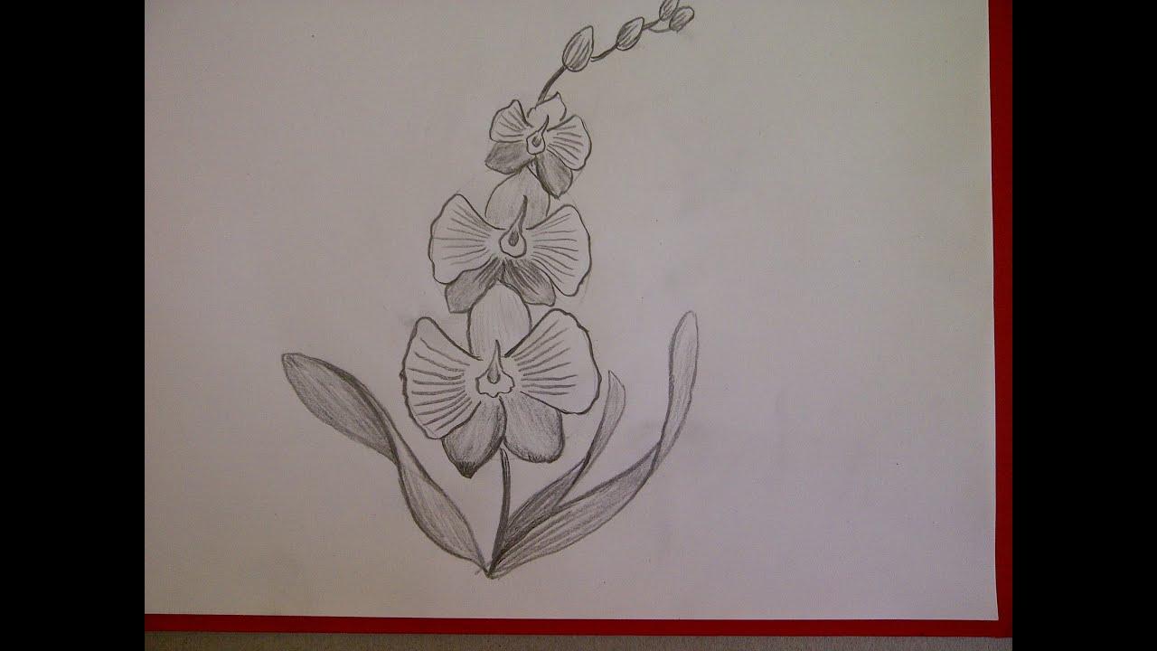 Как нарисовать орхидею карандашом поэтапно