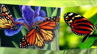 Бабочка - цветок на цветке