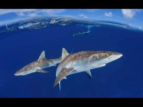Hawaii & Marshall Islands